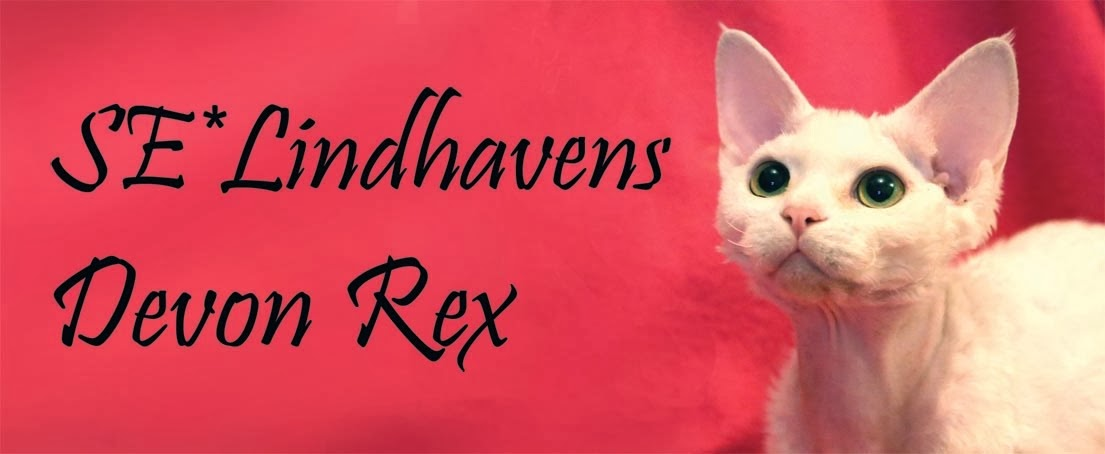 Lindhaven's Devon Rex