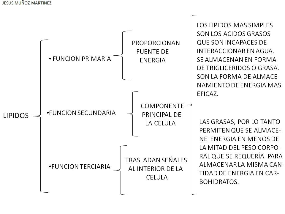 EA08) LIPIDOS. p.44-45 ELABORACION DE ESQUEMAS