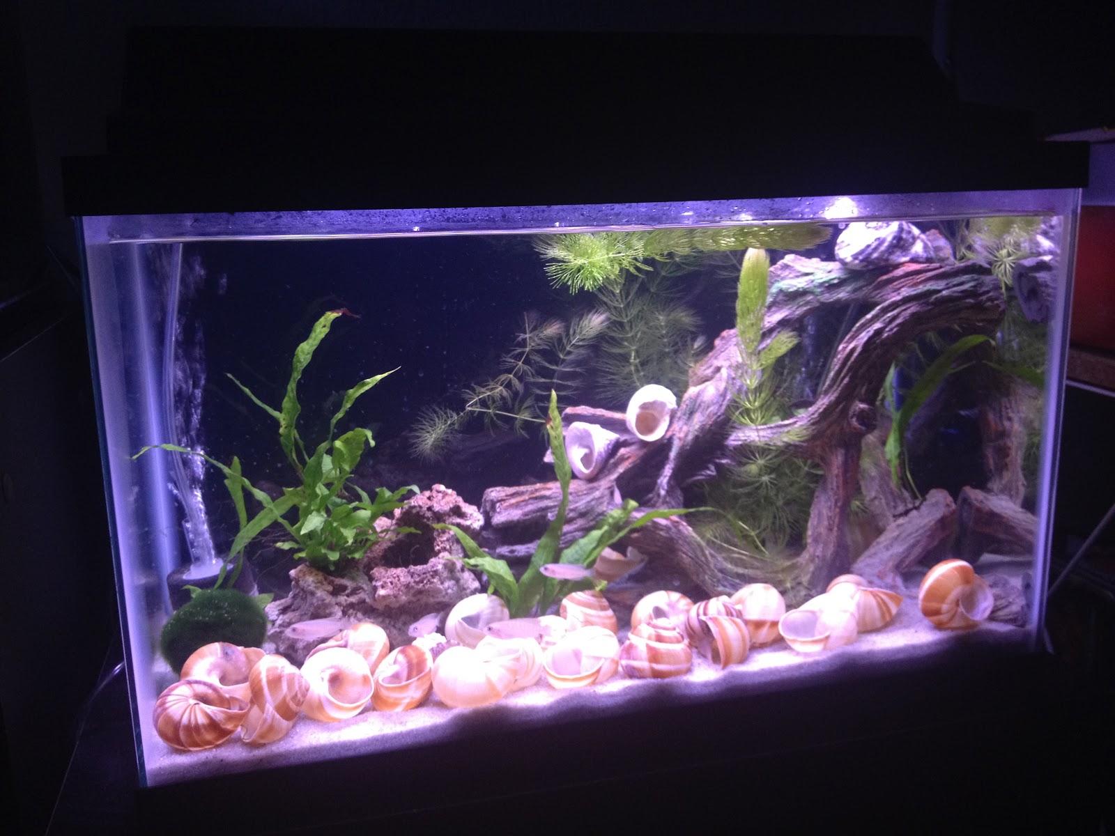 Aquarium Backgrounds Black Black Aquarium Background Tank Cleaned And Black 2017 Fish Tank