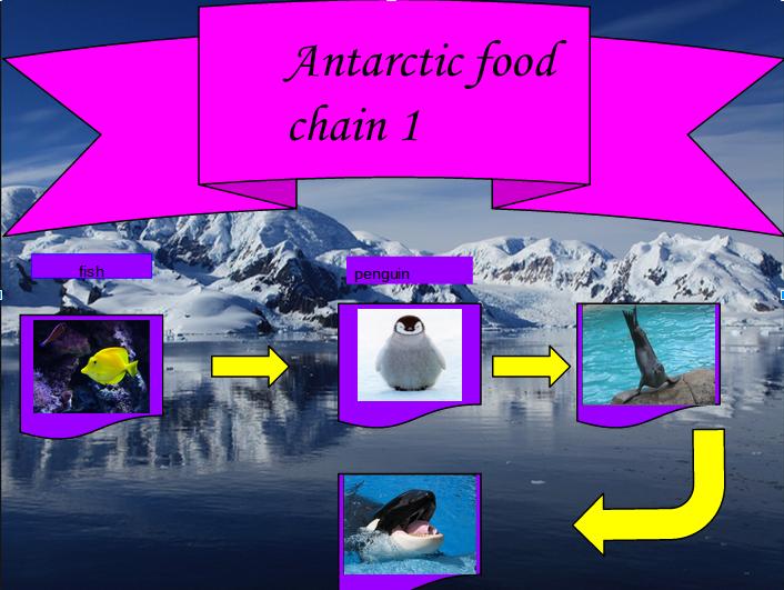 Sohel antarctic food chain for Antarctic cuisine