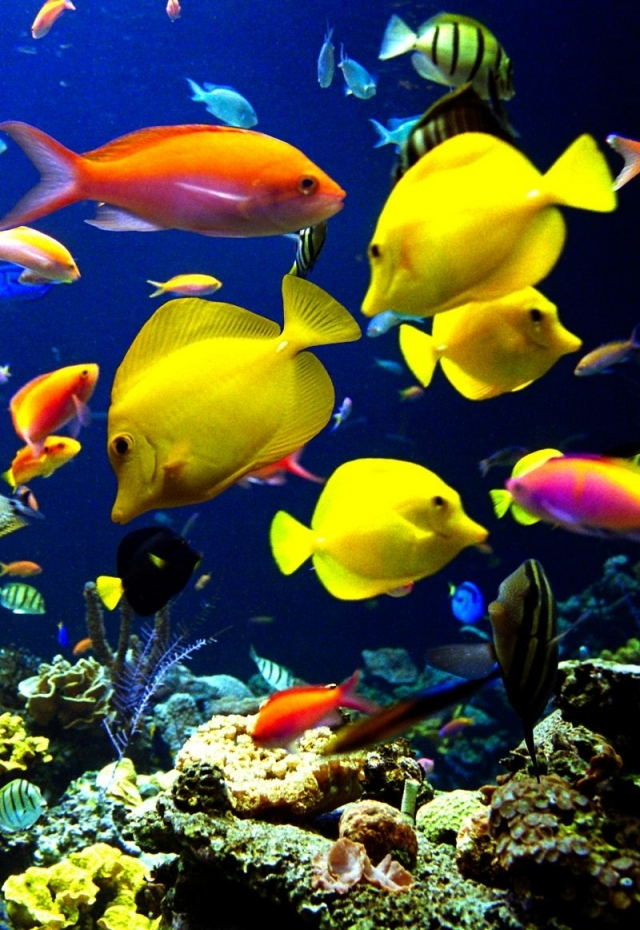 Very Nice Iphone Fish Wallpaper
