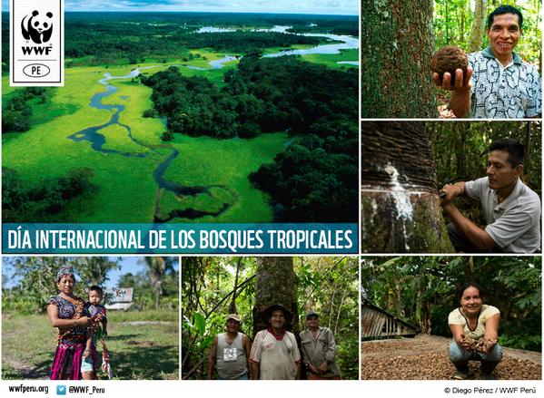26 de junio - Día Internacional de la Preservación de Bosques Tropicales