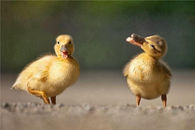 Cute Nestlings by Robert Adamec