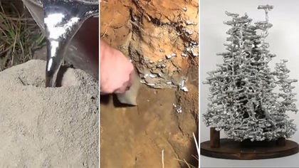 Molten Aluminum Turns Ant Colonies Into Art