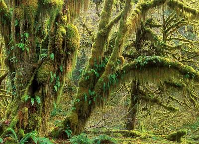 10 fotografías del bosque (lugares para respirar aire puro)