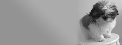 dog facebook covers