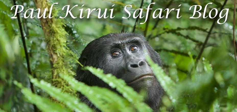 Paul Kirui Safari Blog