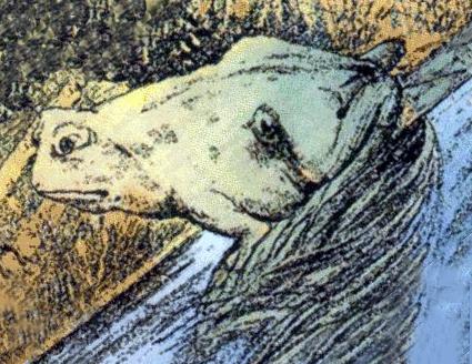 Frog Horse Drawing Anura Metamorphosis
