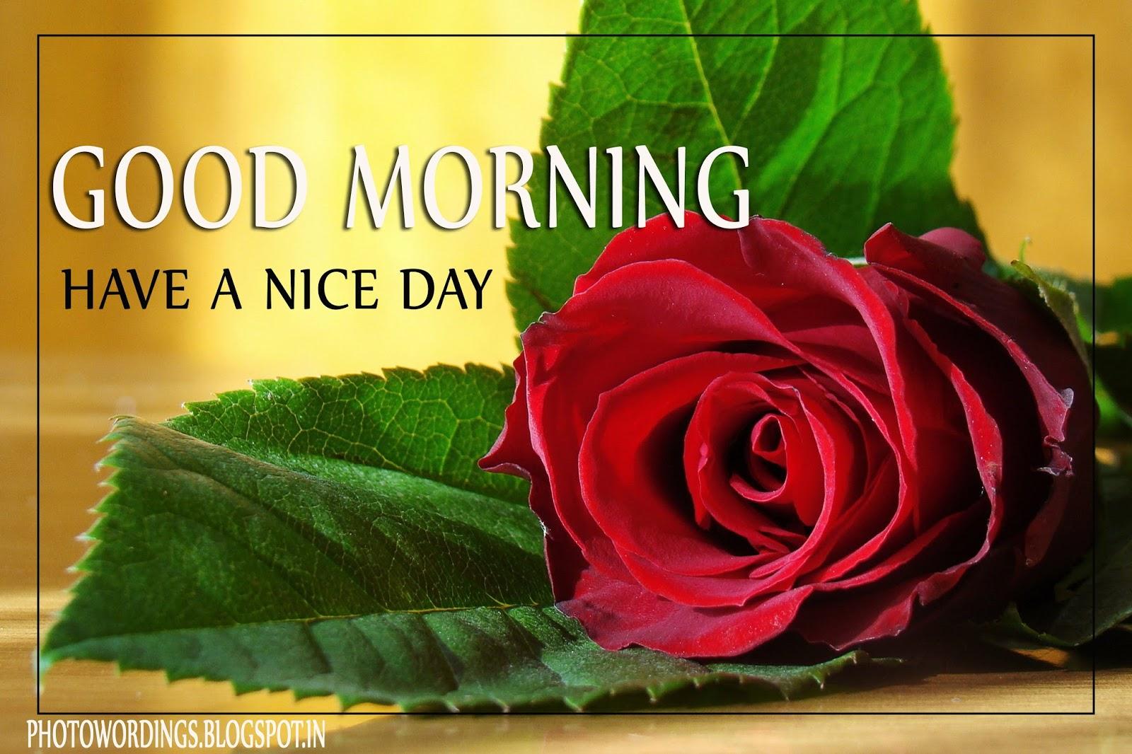 Good Morning Love Flower Image : Beautiful flower love good morning photo wordings