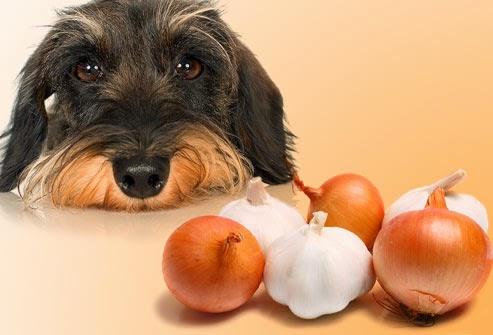 Cachorro pode comer alho?
