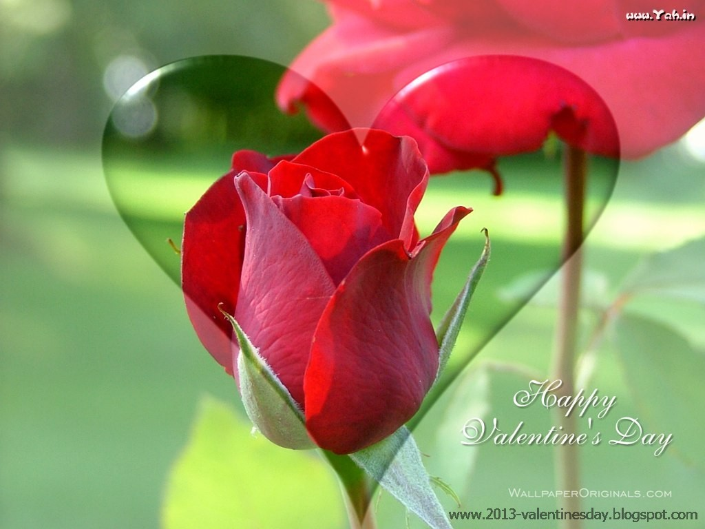 knumathise: red rose i love you wallpaper images