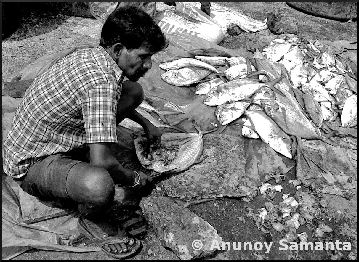 A Fisherman at Visakhapatnam Fishing Harbour