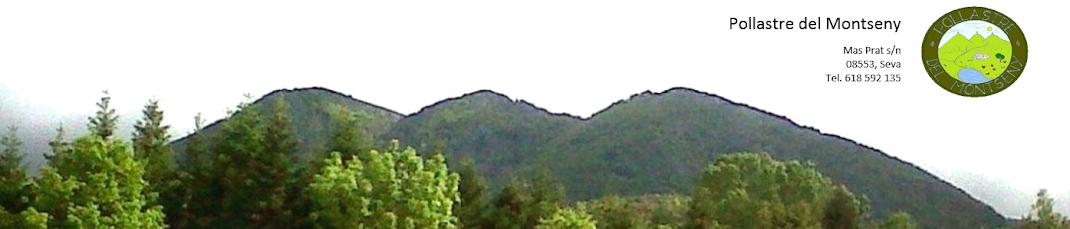Pollastre de pages del Montseny - Venta online