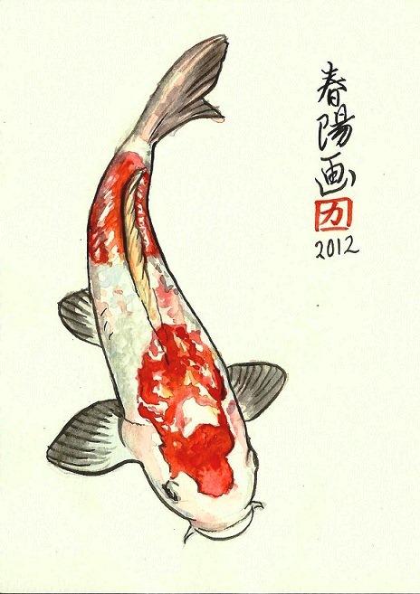 Motivos entre muchos que convierten a los peces en las for Pez koi pequeno