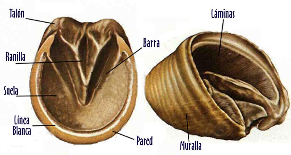 Turf Sanlúcar: El Casco del Caballo y sus Defectos