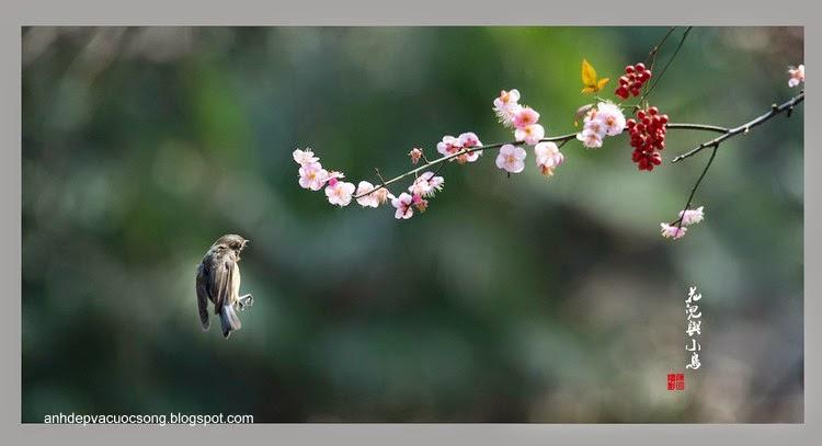 Những chú chim tung tăng ngày nắng ấm 2