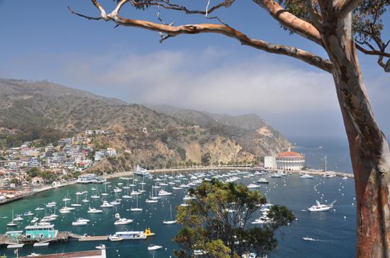 Catalina Island Casino Avalon harbor