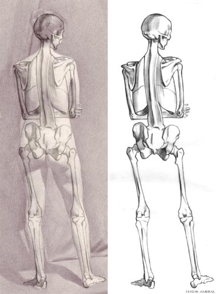 Tara Donovans Teaching Blog Week 6 Motion Studies Anatomy Of