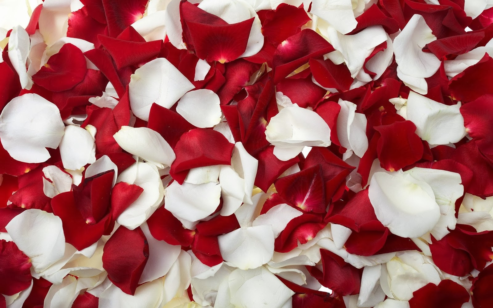 Red And White Wallpapers Keywords Here