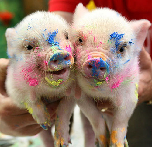today is national pig day   weddingbee