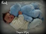 Noah 3 né le 13 déc.2011