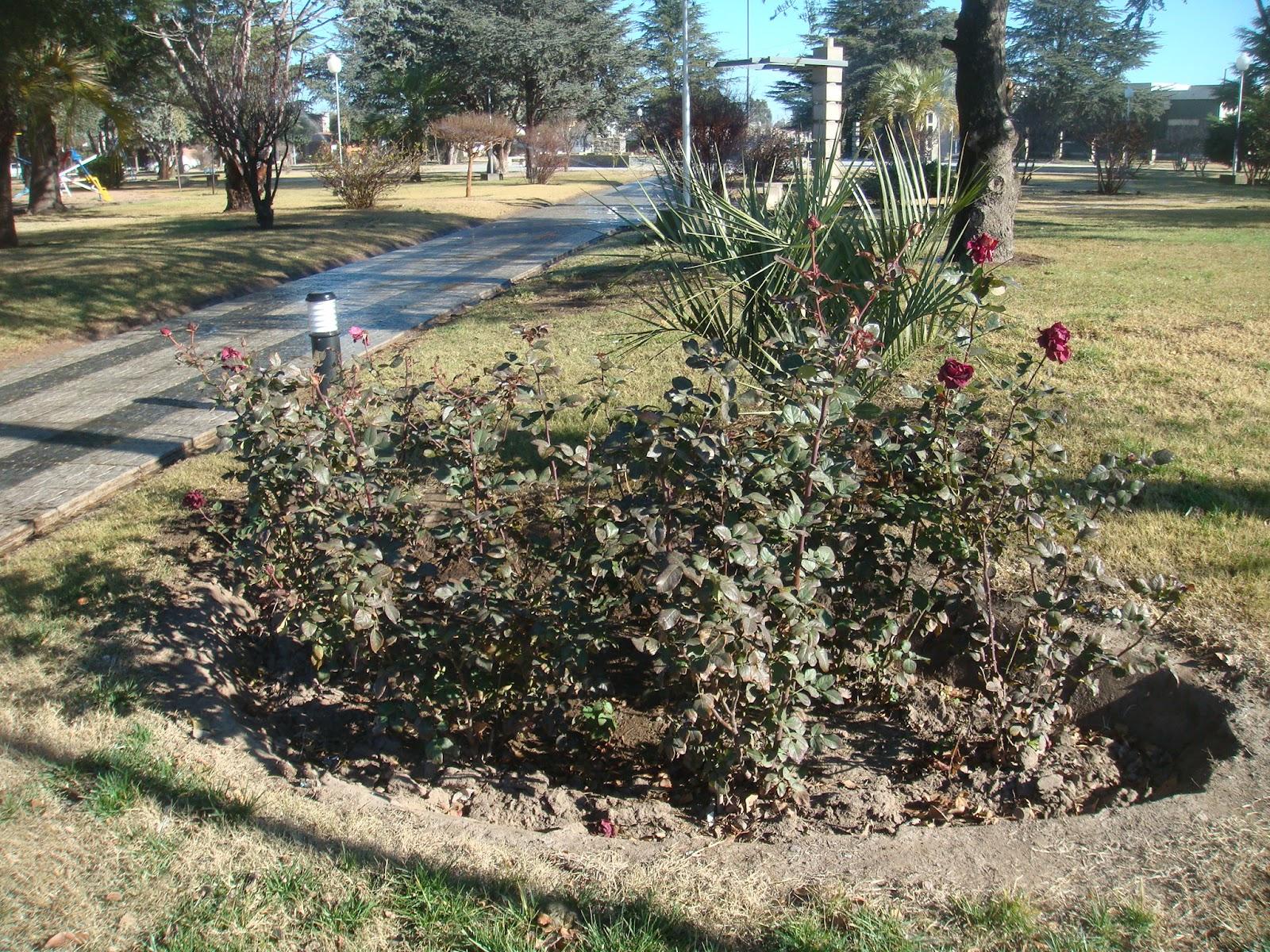 Jardiner a pampeana rosales pie bajo mejores flores for Jardineria rosales
