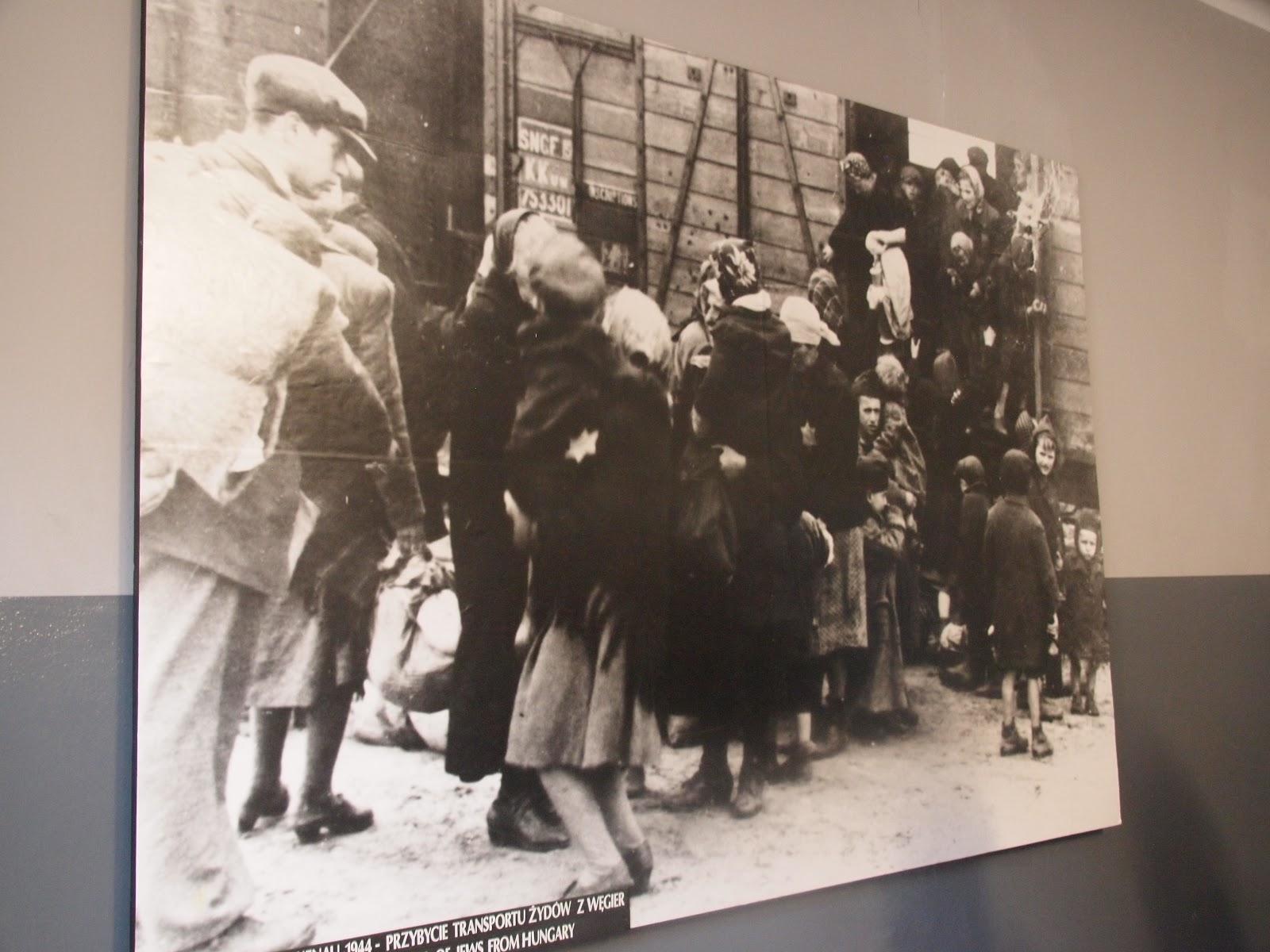 アウシュヴィッツ強制収容所の画像 p1_19