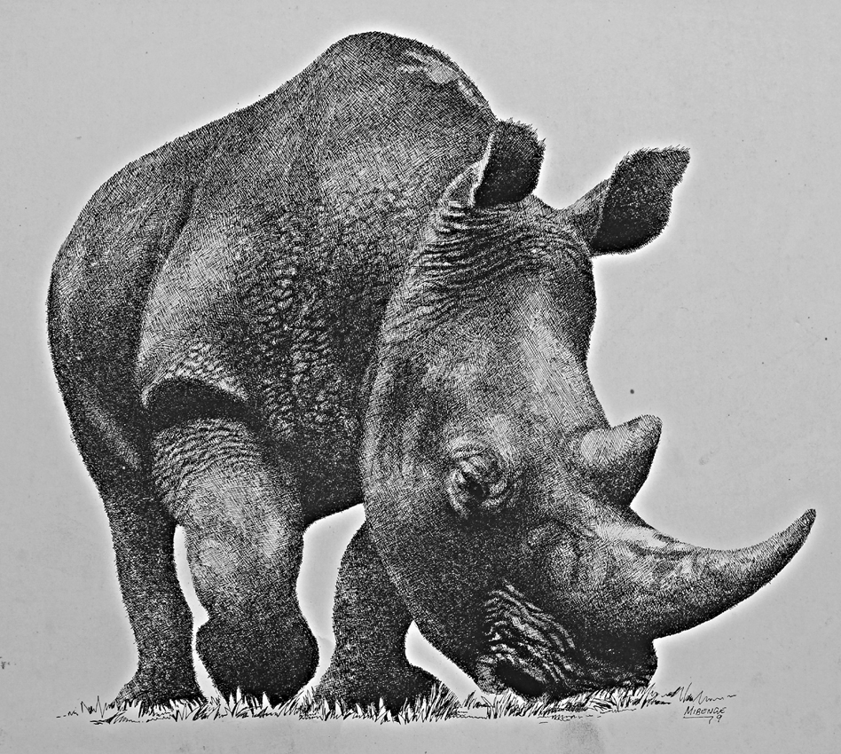 essay on rhinoceros In the last 10 years, more than 7000 rhinos have been poached we're working to  stop this happening and you can help - find out more.