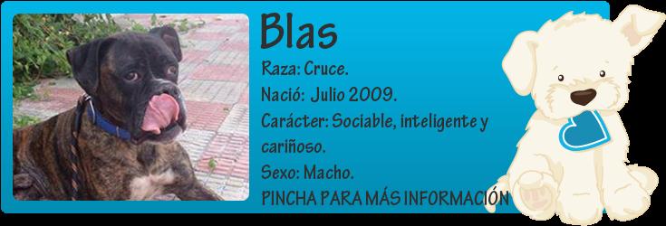 http://mirada-animal-toledo.blogspot.com.es/2014/07/blas-ayuda-para-el.html