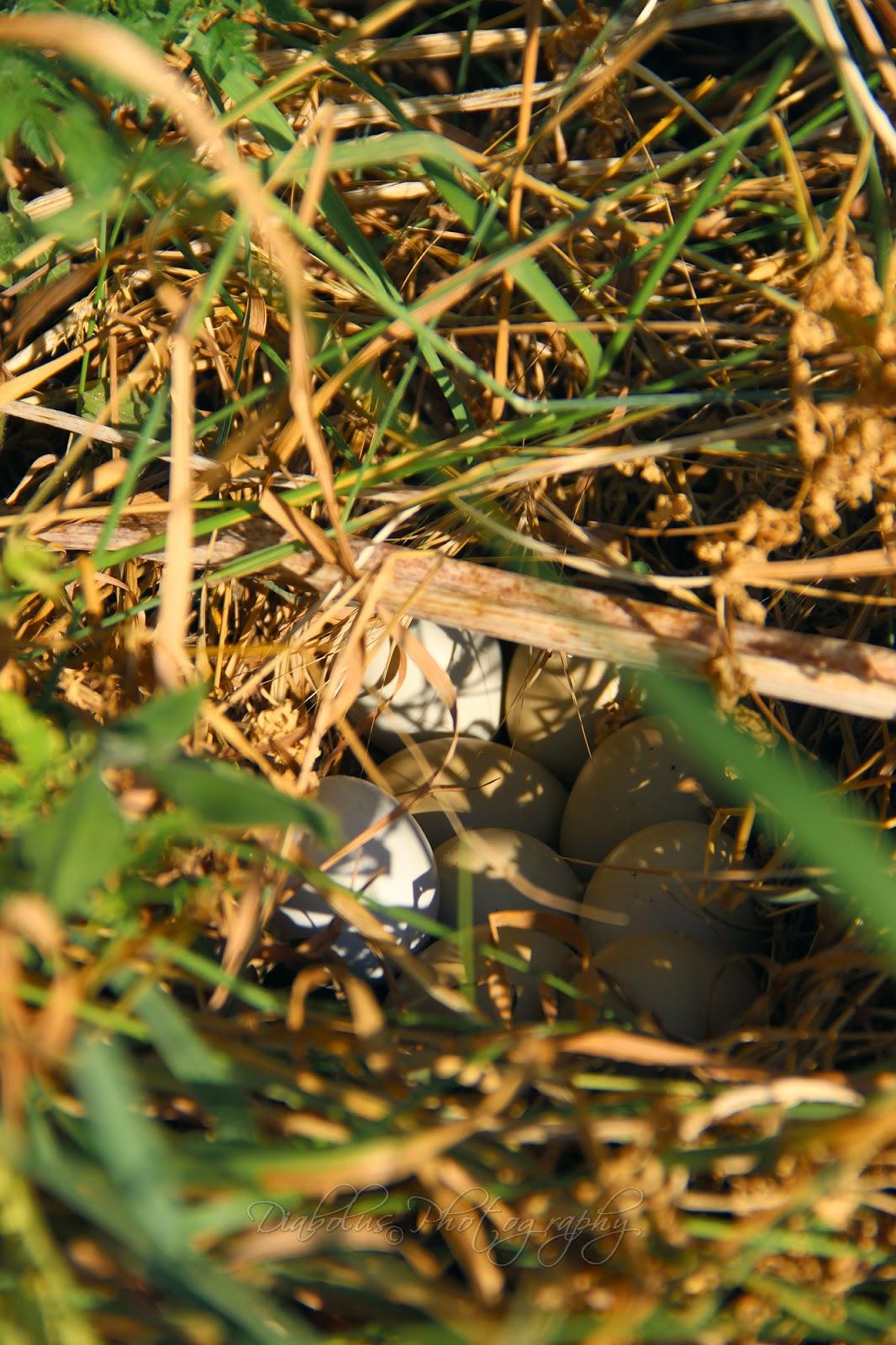 Ptačí hnízdo/The Bird Nest