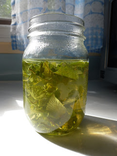 Steeping raspberry leaf tea