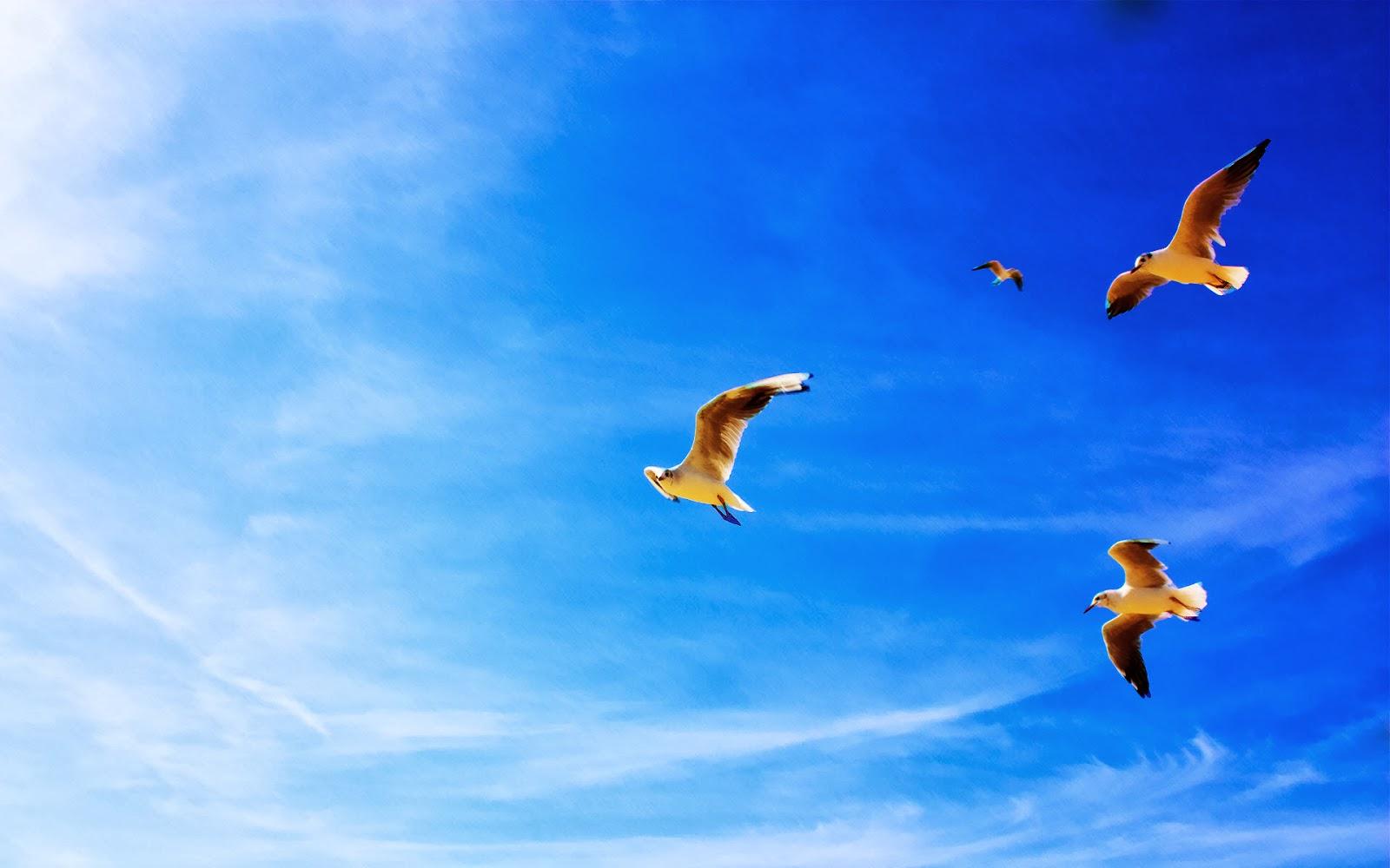 Animals Wallpapers   Birds Wallpapers   HD Desktop