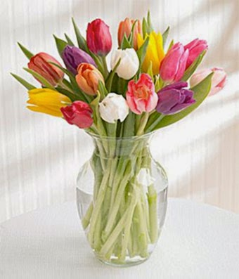 Tulips Flowers delivery same day
