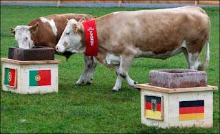 البقرة ايفون