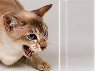Mengapa kucing suka menggigit saya?