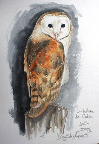 lechuza acuarela ilustración tyto alba wildlife art Asociación Naturalista Abanto
