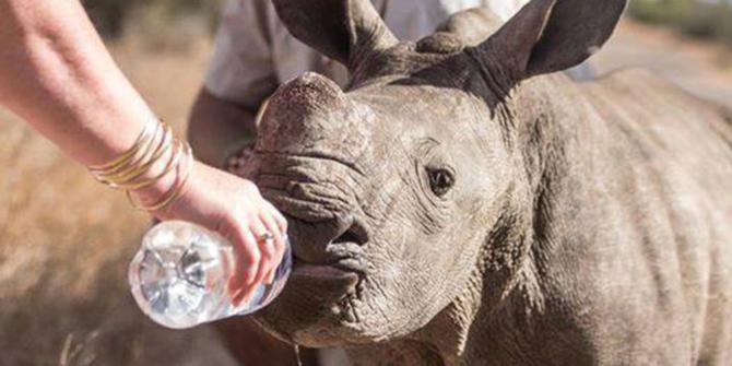 Perburuan badak terus merajalela di Afrika Selatan