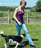 Effective And Easy Ways To Train Your Dog