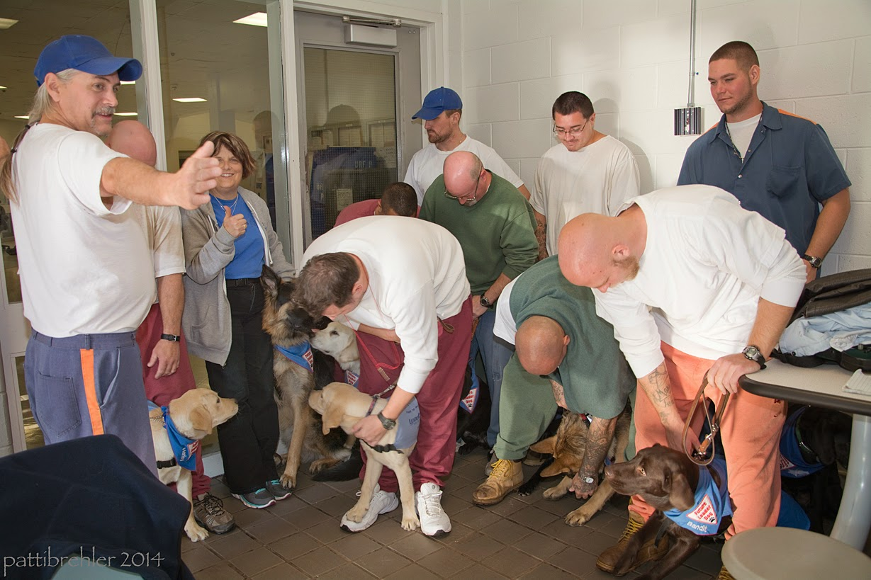 A man is standing on the left with his arms stretched out, facing a group of men (and one woman) and their puppies. Several of the men are bending over to settle their puppies, they are in a tight corner of a room, with a glass wall and door on the left and a white brick wall on the right.