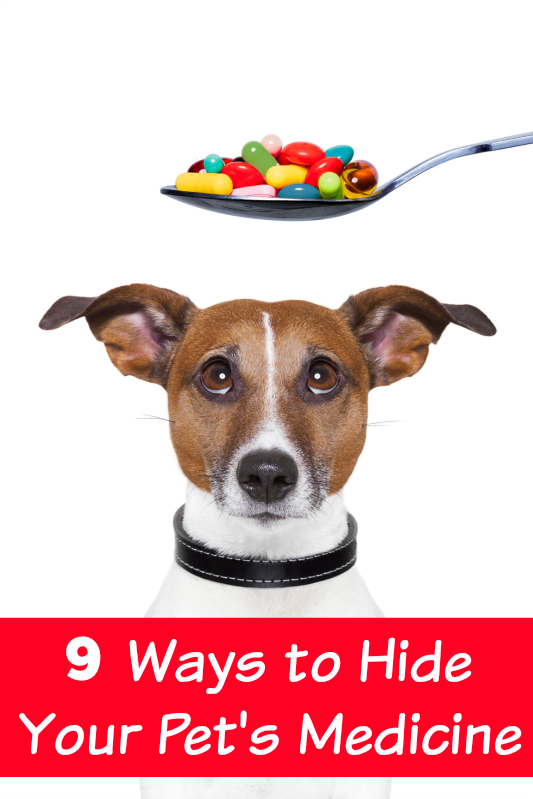 Can Dogs Pills Be Crushed In Food
