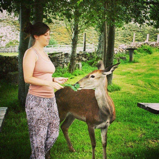 bambi ciervo