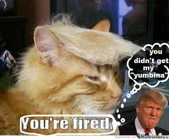 YOU ARE FIRED 2016