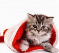 Cat HD Christmas