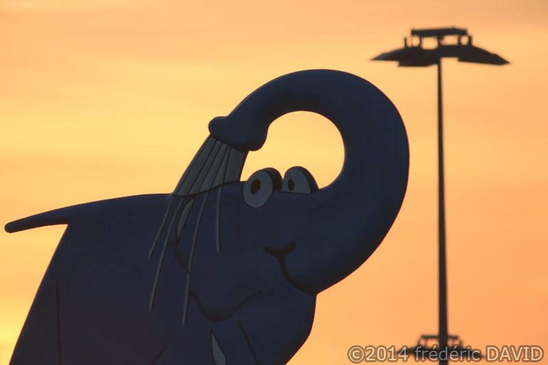 contre-jour soleil matin éléphant silhouette animaux villiers-en-Bière Seine-et-Marne