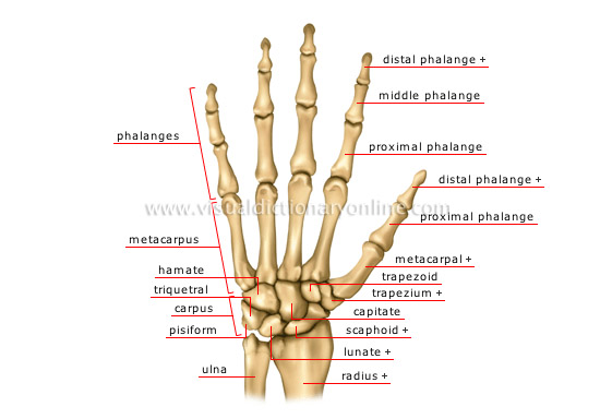 Tom U0026 39 S Physiotherapy Blog  Wrist Injuries Part 1
