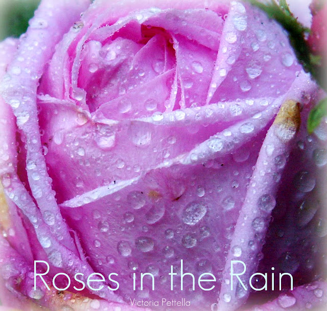 Roses in the rain..