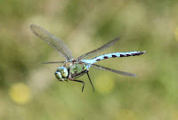 Dragon Fly Photos and Pictures 23