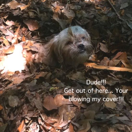 Your blowing my cover!