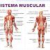 5 Funções dos Músculos