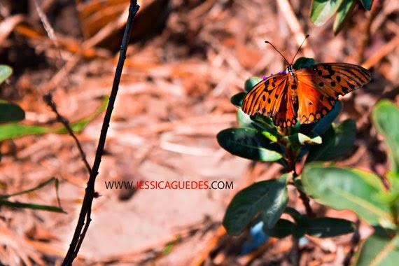 © Jéssica Guedes 2014 - Borboleta laranja (Todos os direitos autorais reservados)